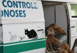 Pokemons de rua acabam virando sabão quando passa o controle de zoonoses